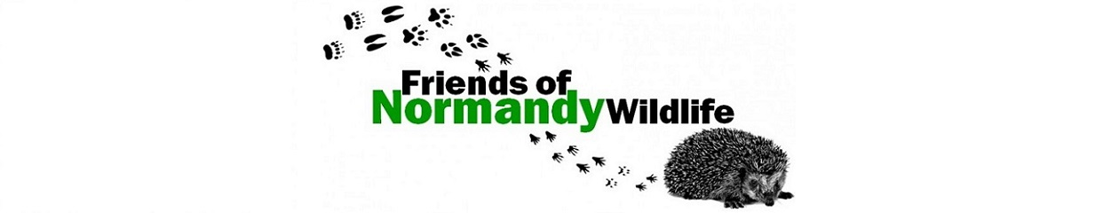 Friends of Normandy Wildlife